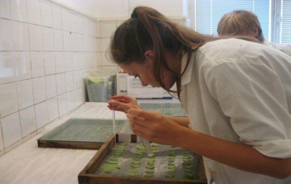 Искусственная инокуляция листьев томата изолятами Phytophthora infestansдля определения вирулентности природных изолятов